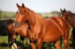 caballo cólico la colaga - pupilaje valladolid
