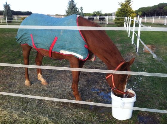 Edad de los caballos