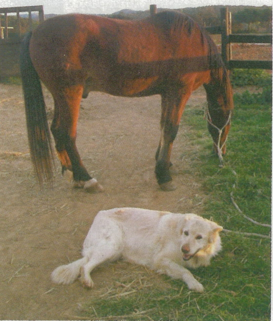 Perro y caballo
