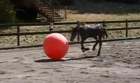 los caballos tambien juegan a la pelota