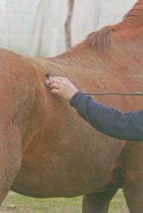 Constantes vitales de los caballos