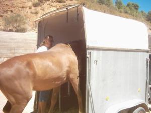 subir el caballo al van